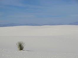 Yucca and sand.JPG