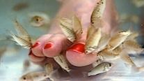 ap_fish_pedicure_ll_120515_wg.jpg