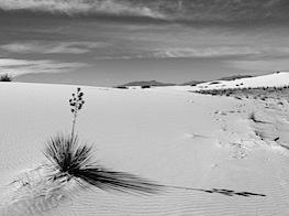 Big yucca and sand.JPG